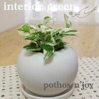 ポトスエンジョイphotosn'joy観葉植物インテリアグリーン