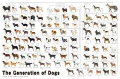 ジグソーパズル 1000ピース いぬ 犬の系統図(50x75cm)(11-372) エポック社 梱80cm t101[ジグソーパズル友蔵 楽天市場店]