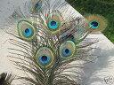 お部屋のアクセントや装飾等に使用されます!ラッキー アイテム 孔雀の羽 大  10本 平子理...