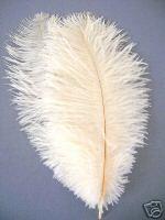 お部屋のアクセントや装飾等に使用されます!オーストリッチの羽 1本平子理沙愛用 即納