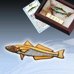 本七宝魚タイニーピンコレクション海水魚シロギス 父の日 ギフト プレゼント おしゃれ 人気