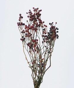 《 ドライフラワー 》大地農園/オオチノウエン 野バラの実・トゲつき Nワークショップ パーツ