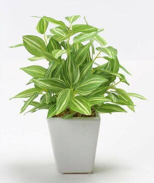 《 造花 グリーン 観葉植物 》花びし/ハナビシ トラディスキャンティアミニポット グリーン/クリームインテリア