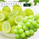 <<9月上旬お届け>>山梨県産 シャインマスカット 1kg