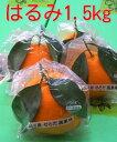 広島の旬の柑橘「はるみ」せとだ自然熟「葉付きはるみ」6個入広島「はるみ」みかん1.5kg箱2月末ごろより順次発送予定【日時指定不可】同梱不可の商品有り