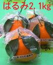 広島の旬の柑橘「はるみ」せとだ自然熟「葉付きはるみ」広島「はるみ」みかん2kg箱2月末ごろより順次発送予定【日時指定不可】同梱不可の商品有り