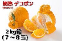 【愛知県の旬の果物】蒲郡産温室デコポン樹熟でこぽん【贈り物に最適!】