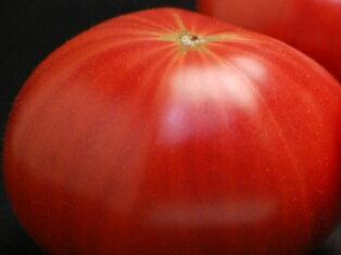 【出雲フルーツトマト】糖度8度以上1kg箱自家用調理用にいかがですか♪島根産のフルーツトマト店長おすすめ【立久恵とまと】【とまと 取り寄せ】【トマト 取り寄せ】1月下旬より順次発送予定