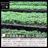 【送料無料】本わさび約7人前中サイズ生わさび山葵ワサビわさび堤農園(90g前後)