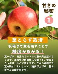 葉っぱを撮らない栽培で糖度が増えます。