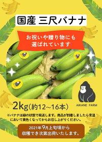国産農薬不使用バナナ2kg(約12〜16本)