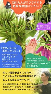 ファーム内では、熱帯の珍しい植物も一緒に育てています