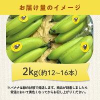 お届けイメージ、国産農薬不使用バナナ2kg(約12〜16本)
