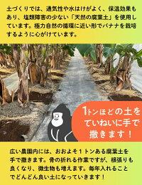 1トンの土を園内に手作業で撒いていきます