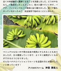 沖田さんは、バナナを作る前は、東京で公務員をしていました。