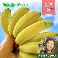 こだわり農家直送広島県アイカネファーム三尺バナナ2kg
