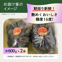 こだわり農家直送岡山県ゆうや農園朝採り直送糖度16度大粒&濃厚果汁ピオーネ600g×2房
