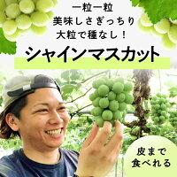 こだわり農家直送岡山県ゆうや農園朝採り直送大粒&果汁あふれる糖度18度シャインマスカット2房(600g)