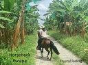 Horseback Escape...