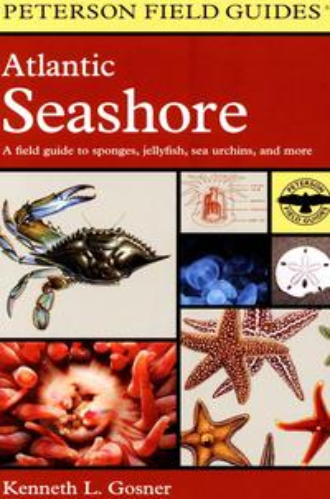 洋書, FICTION & LITERTURE Atlantic Seashore A Field Guide to Sponges, Jellyfish, Sea Urchins, and More Kenneth L. Gosner
