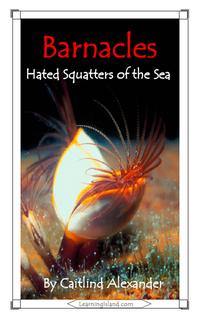 Barnacles: Hated Squatters of the Sea【電子書籍】[ Caitlind L. Alexander ]
