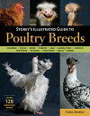 Storey's Illustrated Guide to Poultry BreedsChickens, Ducks, Geese, Turkeys, Emus, Guinea Fowl, Ostriches, Partridges, Peafowl, Pheasants, Quails, Swans【電子書籍】[ Carol Ekarius ]