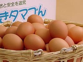 生まれ日の指定はできませんが美味しくて安心!普段使い卵80個入