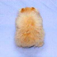 ぬいぐるみぬいぐるみポメラニアン犬ポメラニアン特選品四つ立ちポメ