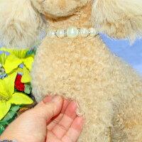 トイプードル特選品●ファークラフト社製毛皮ラムぬいぐるみクリスマスギフトイヌネコテディベアクマ