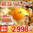【送料無料】 朝採り もみじ たまご 40個(破損補償10個含む) 【美味しい 卵 九州 熊本県産 新鮮】