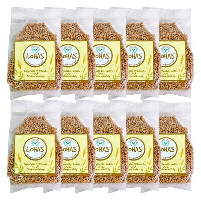 北海道・知床産農薬・化学肥料不使用秋まき小麦の種(スプラウト栽培用)(300g)10袋セット