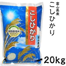 米 日本米 Aランク 令和2年度産 富山県産 こしひかり 20kg ご注文をいただいてから精米します。【精米無料】【特別栽培米】【こしひかり】【新米】(代引き不可)【送料無料】