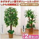 観葉植物 インテリアグリーン 2点セット 人工観葉植物 造花 光触媒 ...