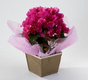 【母の日特集2011・選べるお花は41種!】母の日に感謝の気持ちをこめて、贈り物。グリーティン...