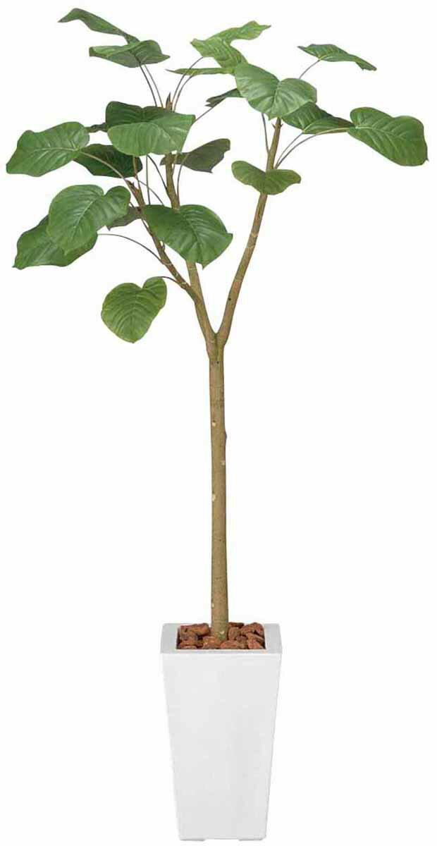 アートグリーン 人工観葉植物 光触媒 光の楽園 ウンベラーダ1.7(代引き不可):リコメン堂生活館