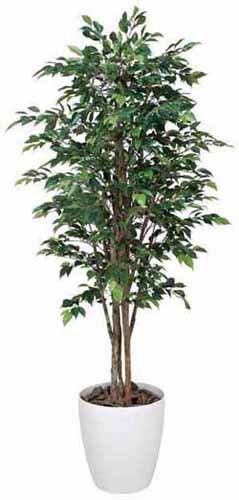 アートグリーン 人工観葉植物 光触媒 光の楽園 ロイヤルベンジャミン1.6(代引き不可)【S1】:リコメン堂生活館