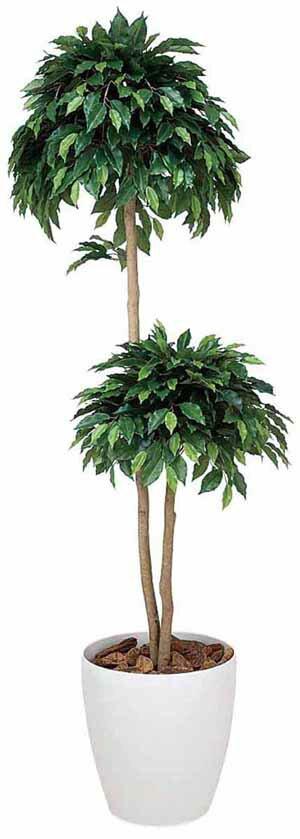 アートグリーン 人工観葉植物 光触媒 光の楽園 ベンジャミンダブル1.8(代引き不可):リコメン堂生活館