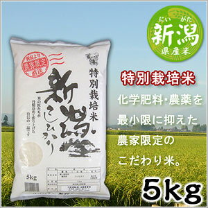 米 日本米 Aランク 産地直送 25年度産 新潟県 特別栽培米 こしひかり 5kg JA直送(代引き不可)【送料無料】【S1】
