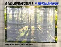 絵画風壁紙ポスター(はがせるシール式)東京タワー夜景東京オリンピックキャラクロTKT-005A1(A1版830mm×585mm)建築用壁紙+耐候性塗料