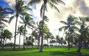 絵画風 壁紙ポスター (はがせるシール式) マイアミ マリンパーク ヤシの木 フロリダ州 アメリカ キャラクロ UMAM-009W2 (ワイド版 603mm×376mm) 建築用壁紙+耐候性塗料 インテリア