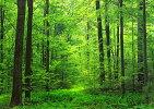 絵画風壁紙ポスターウォールステッカー(はがせるシール式)剥がせる壁紙森林森林浴緑目の保養気分転換癒しキャラクロリメイクシートオシャレSNR-001A1(A1版830mm×585mm)