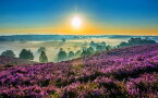 絵画風 壁紙ポスター (はがせるシール式) 日の出 ホーへヘルウェ国立公園 オランダ 絶景 神秘 癒し パワー 瞑想 キャラクロ SSRS-004W2 (ワイド版 603mm×376mm) 建築用壁紙+耐候性塗料 インテリア