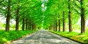 絵画風 壁紙ポスター (はがせるシール式) -地球の撮り方- どこまでも続く並木道 メタセコイア並木の新緑 日本街路樹百景 滋賀県高島市 パノラマ 日本の絶景 キャラクロ C-ZJP-041S1 (1152mm×576mm) 建築用壁紙+耐候性塗料 インテリア