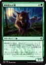 realizeで買える「マジックザギャザリング MTG A25 JP 190 森林群れの狼(日本語版コモン【新品】」の画像です。価格は30円になります。