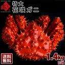 ≪真っ赤に輝く幻の蟹≫超特大 花咲蟹 花咲ガニ 1.4kg前後 最高品質 冷凍市場に出回らない大きさ ...