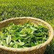 ちょっと甘めでさっぱりとした緑茶の香り。グリーンティー -Green Tea-10mlハイグレード アロマクラフト用 フレグランスオイル(手作り石鹸 香水 キャンドル バスソルト アロマペンダント サシェ ディフューザー バスボム用)