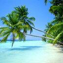 トロピカルなフルーツとココナッツの香り。ハワイアンパラダイス -Haw...