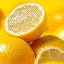 高品質なイタリア産のレモンオイル。レモン(Lemon)50ml天然100%のエッセンシャルオイル(精油)(手作...