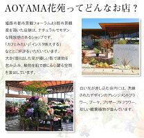 AOYAMA花苑について1