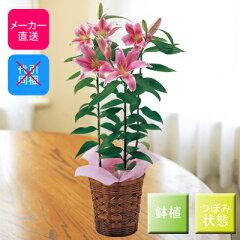 2014年母の日特集♪明るいピンクの花色が人気です。存在感のある大きさで香りも楽しむことがで...